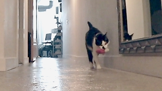 Kitty Gets Really Upset When Owner Goes To Work, And Our Hearts Are Melting - Video