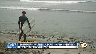 Swimmers warned about shark sighting - Video