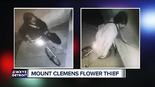 Mount Clemens police search for flower thief - Video
