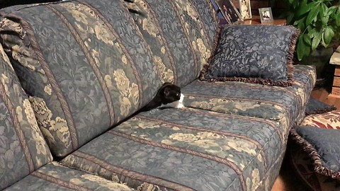 Cat suddenly emerges from unexpected hiding spot