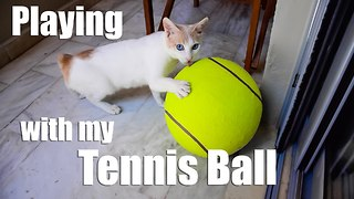 Cat Playing With Giant Tennis Ball - Video
