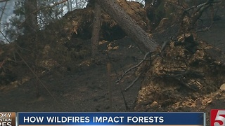How Wildfires Will Impact Great Smoky Mountains, Forest - Video