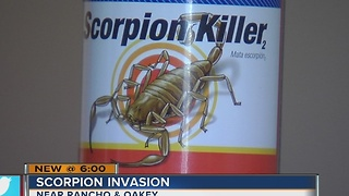 Woman asks for help because of scorpions in her apartment - Video