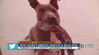 Former sheriff says lies and cover-up evident in deadly dog shooting - Video