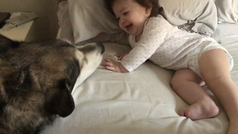 Howling Dog Makes Baby Girl Happy After Walking Into Room