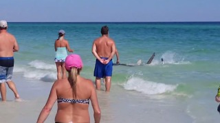 Sharks Tussle in Shallow Waters on Okaloosa Island Beach - Video