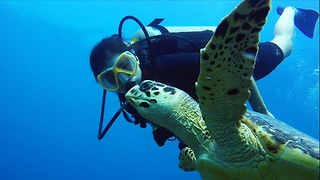 This Young Diver Has A Gift For Connecting With Sea Turtles - Video