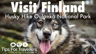 Visit Finland: Hiking with huskies in Oulanka National Park - Video