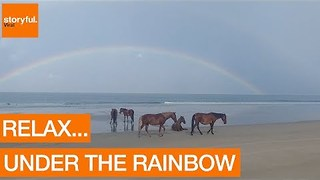 Rainbow Forms as Horses Relax on Carolina Beach - Video
