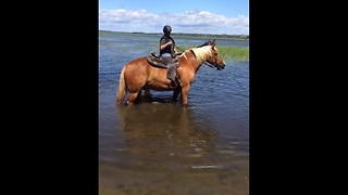 Playful horse splashes in water