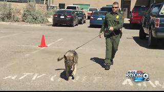 Drug case stalls after federal attorneys sit on information about Border Patrol K9 - Video