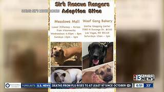 Pucks 4 Paws: Win Vegas Golden Knights tickets while helping Sir's Rescue Rangers