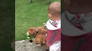 Adorable Baby Enjoys a Walk With Her Furry Sisters