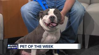 Pet of the Week - Odie - Video