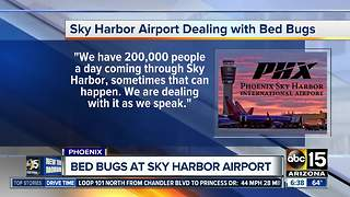 Sky Harbor Airport dealing with bed bugs