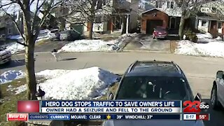 Hero dog stops traffic to save owner's life