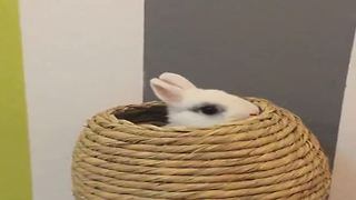 Playing Game Hide and Seek with White Rabbit  - Video