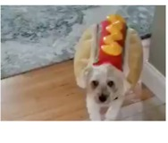 This Pup is Looking Like One 'Hot Dog' in His Halloween Costume