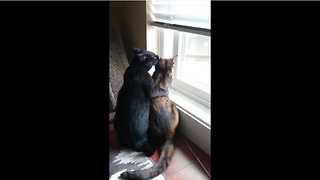 Rescue cats become the best of friends - Video