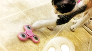 Kittens fascinated by mysterious toy  - Video