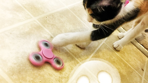 Kittens fascinated by mysterious toy