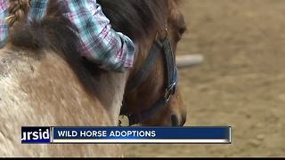 Mustang Heritage Foundation auctioning wild horses - Video