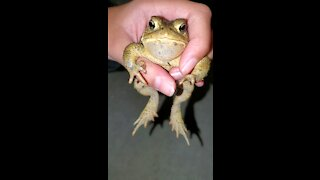 Wild toad clearly loves being petted