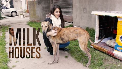 A place to call home for abandoned dogs