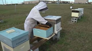 New rules could be bad news for beekeepers | Digital Short - Video