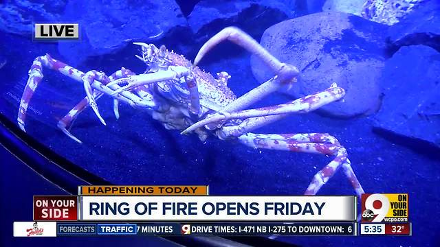 'Mysterious' Ring of Fire exhibit opening at the Newport Aquarium this week