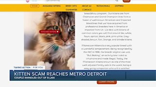 Kitten scam reaches metro Detroit