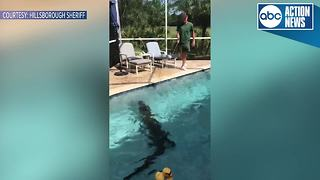 9-foot-long gator removed from Hillsborough County pool - Video