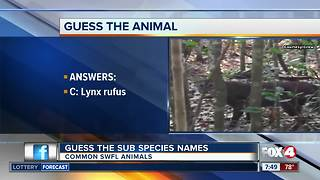 Guess the SWFL animal sub species - Video