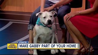 July 15 Rescues in Action: Make Gabby a new addition to your family
