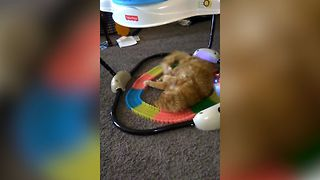 Cat's Hunting Engine Revs On Toy Train - Video