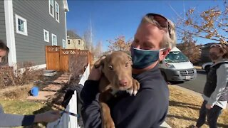 Mile High Labrador Retriever Mission: 80 dogs rescued from Texas, now in Colorado