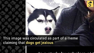 Did a Study Show That Dogs Exhibit Jealousy? - Video