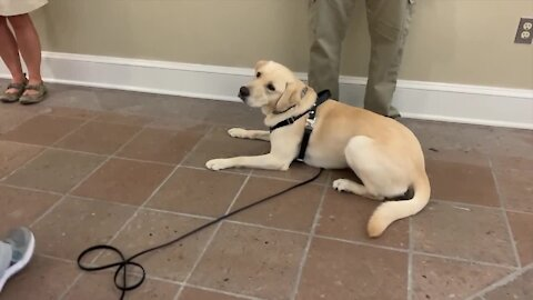 COVID-detecting dog in Florida