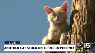 AGAIN!? Another cat stuck on a pole in Phoenix