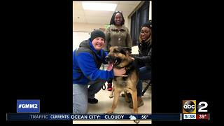 Dog reunited with family after missing for three years - Video