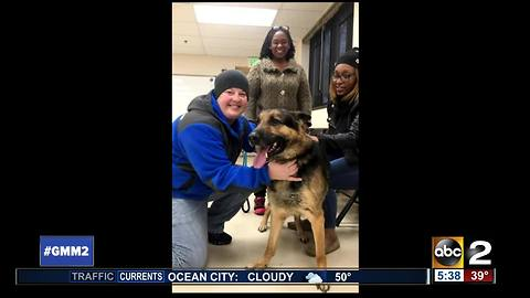 Dog reunited with family after missing for three years