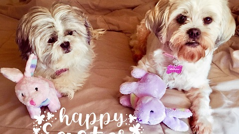 Two cute pups get toys from the Easter Bunny