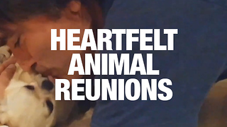 Animal-Human Reunions That Will Melt Your Heart - Video
