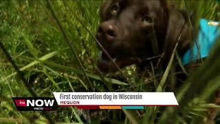Mequon Nature Preserve gets invasive species sniffing dog - Video