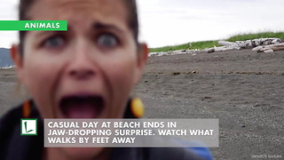 Casual Day at Beach Ends in Jaw-Dropping Surprise. Watch What Walks by Feet Away - Video