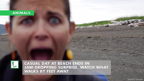 Casual Day at Beach Ends in Jaw-Dropping Surprise. Watch What Walks by Feet Away