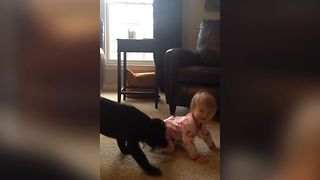 Puppy Plays Tug Of War With Baby