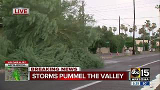 Storm causes trees to fall in Scottsdale