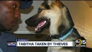 Service dog stolen from man outside grocery store - Video