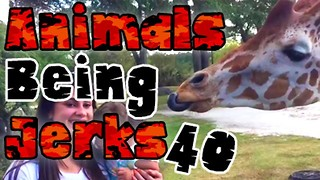 Animals Being Jerks #40 - Video